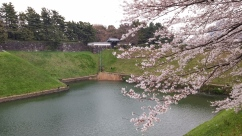 Chidorigafuchi Park, Chiyoda, Tokyo